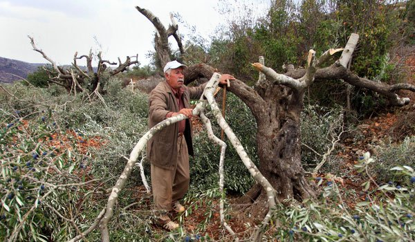 Settlers cut off branches of trees in the northern West Bank. Souce: International Middle East Media Center